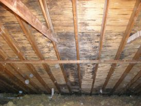 Mold Removal Amp Remediation In Youngstown Oh Your Mold Man
